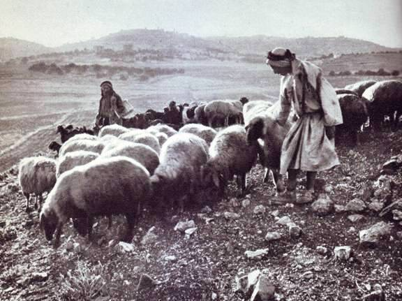 Bethlehem_shepherds