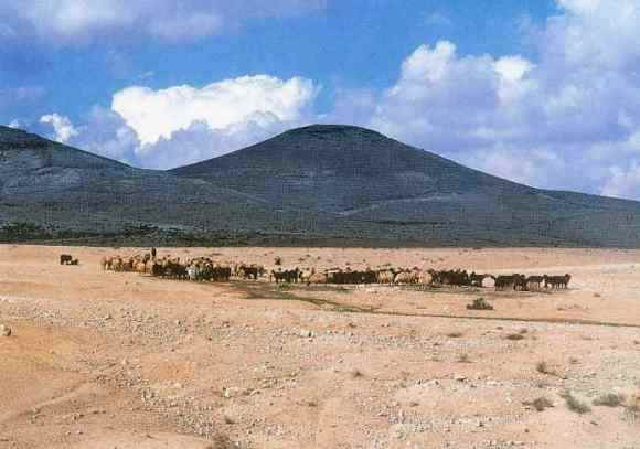 The Negev