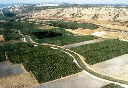The rich coastal plain between Tel Aviv and Haifa